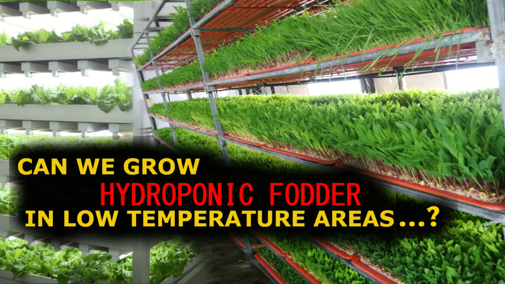Can we grow Hydroponic Fodder in Low Temperature Area