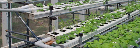 Training Program On Hydroponics 8