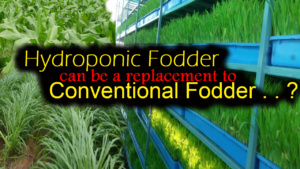 SCIENTIFIC HYDROPONICS